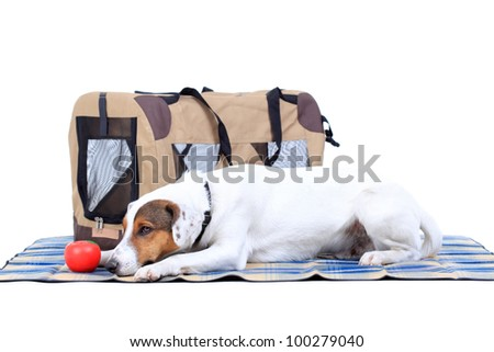 Jack Russel Terrier with a carrying bag against white background - stock photo
