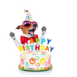 jack russell dog  as a surprise, singing birthday song  ,behind funny cake,  wearing  red tie and party hat  , isolated on white background