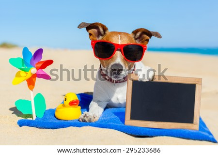 jack  russell dog at the beach on a blue towel , holding an empty blank blackboard or banner, on summer vacation holidays #295233686