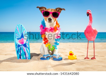 jack russell dog at the beach with a surfboard wearing sunglasses and flower chain at the ocean shore on summer vacation holidays #1431642080