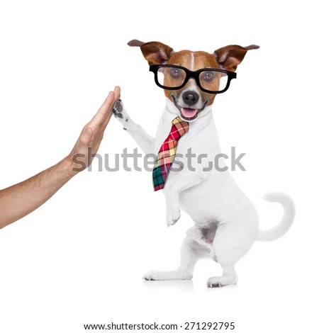 jack russell dog high five with paws with hand of owner happy and celebrating their success as a partner and business team isolated on white background
