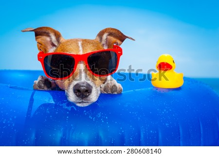 jack russell  dog  on a mattress in the ocean water at the beach, enjoying summer vacation holidays, wearing red sunglasses  with yellow     plastic rubber duck