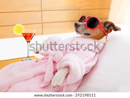 jack russell dog relaxing  and lying, in   spa wellness center ,wearing a  bathrobe and funny sunglasses , martini cocktail included