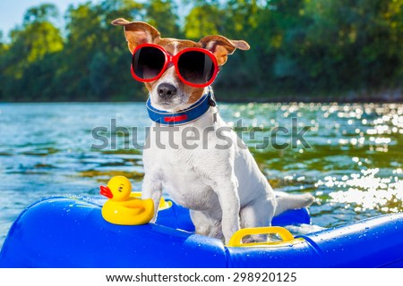 jack russell dog sitting on an inflatable  mattress in water by the  sea, river or lake in summer holiday vacation , rubber toy included