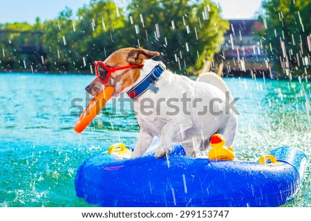 jack russell dog sitting on an inflatable  mattress in water by the  sea, river or lake in summer holiday vacation , splashing fresh water