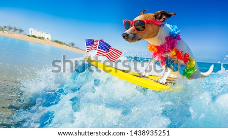 jack russell dog surfing on a wave , on ocean sea on summer vacation holidays, with cool sunglasses and usa independence day flag for the 4th of July #1438935251