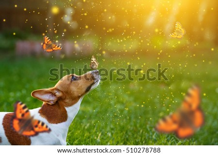 Jack russell puppy dog with butterfly on his nose. Funny moment. #510278788