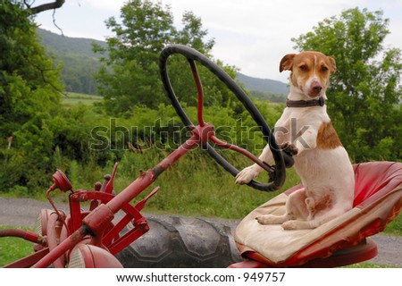 Jack Russell sitting in tractor seat