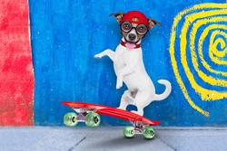 jack russell skater dog with red cap ready to play, balancing on red  skateboard, behind a wall with colors on the street outdoors