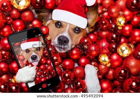 jack russell terrier  dog with santa claus hat for christmas holidays resting on a xmas balls background taking a selfie with smartphone or camera