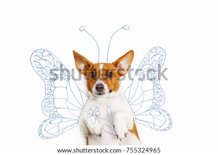 Jack russell terrier with drawing butterfly wings and flower. Humor picture with cute puppy.