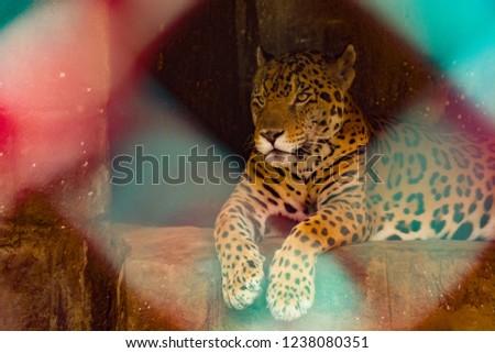 Jaguar in cage #1238080351