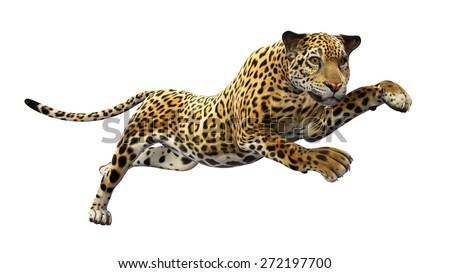 Jaguar leaps, wild animal isolated on white background