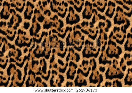 Jaguar, leopard and ocelot skin texture 2 #261906173