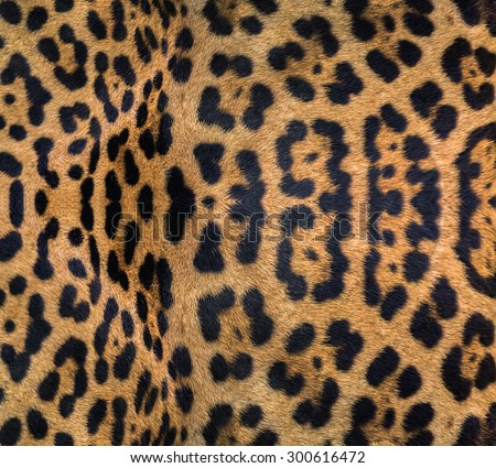Jaguar, leopard and ocelot skin texture. #300616472
