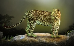 Jaguar looks into the distance at its prey