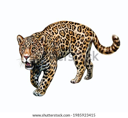 Jaguar (Panthera onca), realistic drawing, illustration for the encyclopedia of animals of Central and South America, isolated image on a white background ストックフォト ©