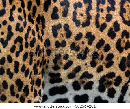 Jaguar skin texture. #302564201