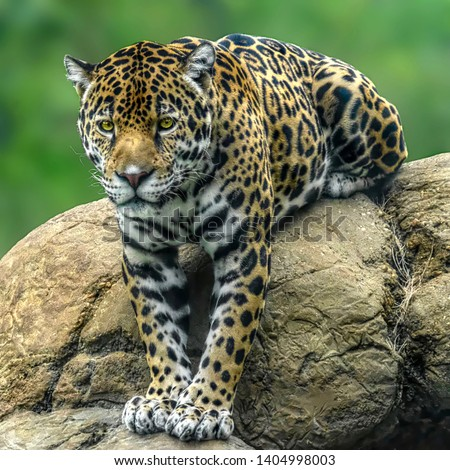 Jaguar takes a break on an unlikely spot #1404998003