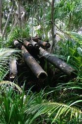 Jaluit atoll, Marshall Islands - Rusting anti-aircraft artillery