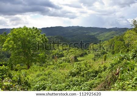 Jamaica. Tropical nature