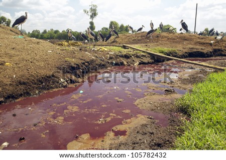 JANUARY 2005 - River of blood flows from Nyongara slaughterhouse in Nairobi, Kenya, Africa