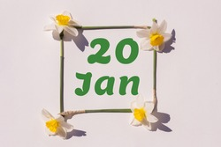 January 20th. Day of 20 month, calendar date. Frame from flowers of a narcissus on a light background, pattern. View from above. Summer month, day of the year concept.