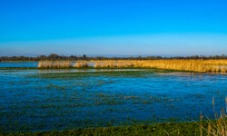 January 2021, the marshes are frozen, not far from Challans, by a superb day in Vendée, France.
