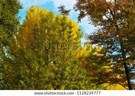 Japan in autumn stock photo