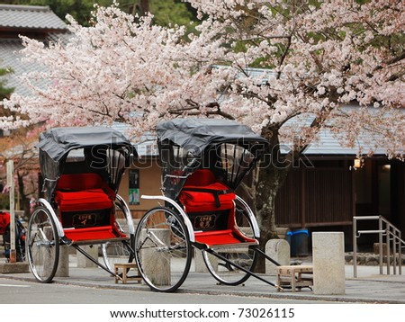Japan ricksha with cherry blossoms tree