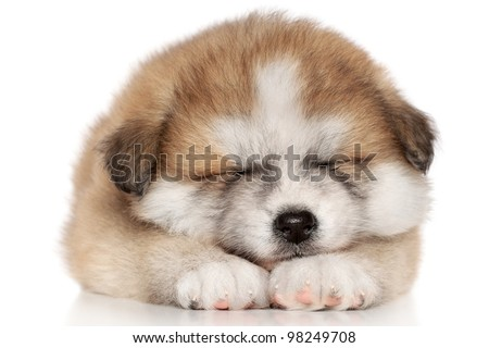 Japanese Akita-inu puppy sleep over white background