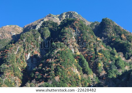 Japanese Alpine colored leaves - stock photo