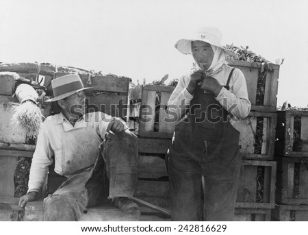 Japanese-Americans agricultural workers packing broccoli near Guadalupe, California. March 1937 photograph by Dorothea Lange.