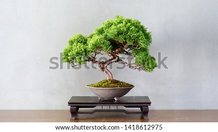Japanese bonsai for my hobby Сток-фото ©