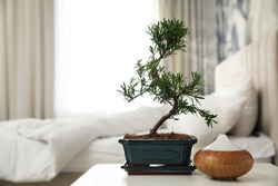 Japanese bonsai plant and oil diffuser on table in bedroom, space for text. Creating zen atmosphere at home