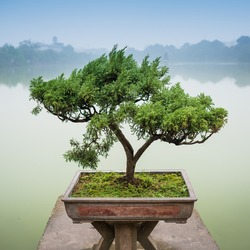 Japanese bonsai tree in pot at zen garden. Bonsai is a Japanese art form using trees grown in containers.