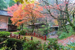 Japanese bridge in the autumn forest