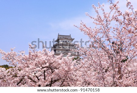 Japanese castle and Beautiful pink cherry blossom (sakura) shot in japan