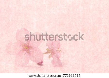 Japanese Cherry Blossom On Pink Vintage Paper Background