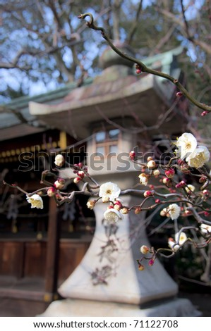 Japanese Lanterns Garden Concrete Large http://www.shutterstock.com/pic-71122708/stock-photo-japanese-concrete-lantern-and-cherry-blossom-taken-in-kyoto.html