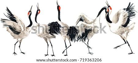 Japanese crane bird watercolor illustration.