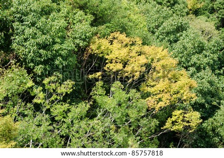 Japanese deciduous forest canopy as seen from above in summer in Osaka, Japan