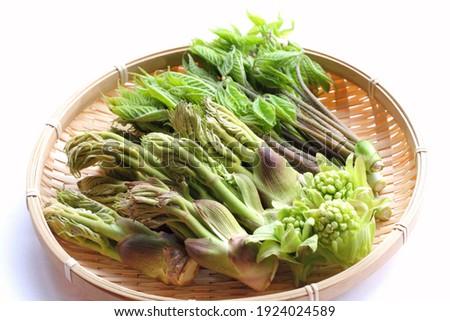Japanese edible wild plants (Koshiabura, Taranome and Fukinotou) Stockfoto ©