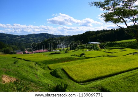 Japanese famous terrace paddy field.This place is Yamabuki terrace paddy field.Daito Ichinoseki Iwate Japan.The middle of September.