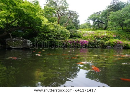 Japanese garden with pond of Koi fish, Japan