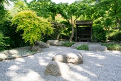 Japanese inspired garden with maple trees, stones and unraked gravel. English garden.