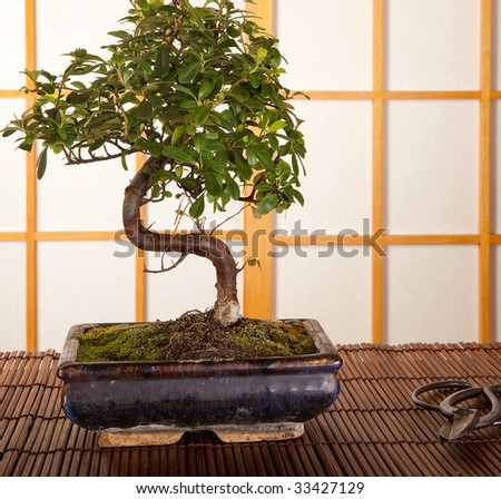 Japanese interior with bonsai tree and pruning scissors