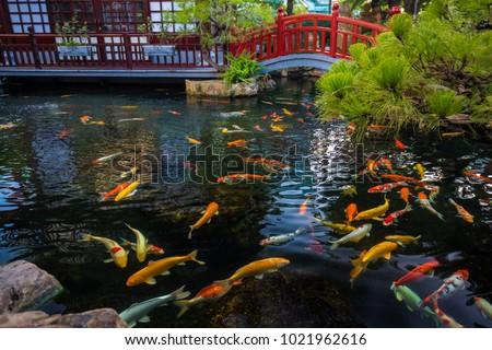Japanese Kois Pool #1021962616