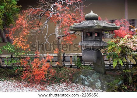 japanese lantern and autumnal maple tree (momiji)