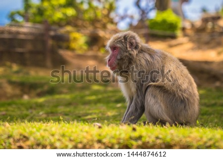 Japanese Macaque in the Arashiyama Monkey Park in Kyoto, Japan #1444874612